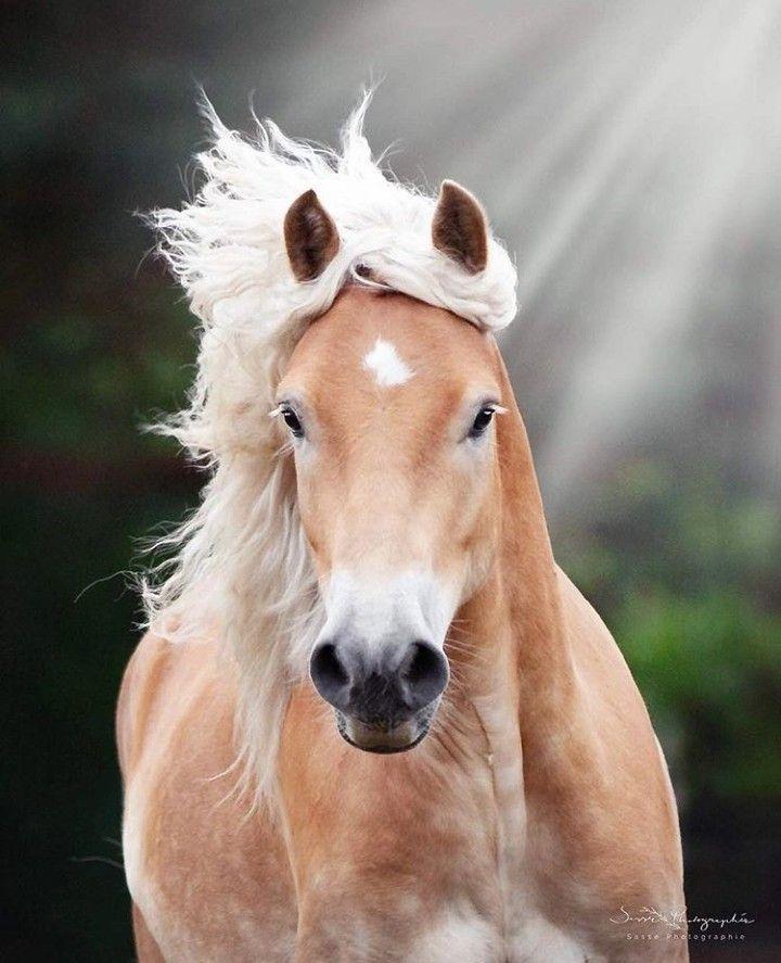 PferdeBild von Gabi Epple Pferde fotografie, Pferde