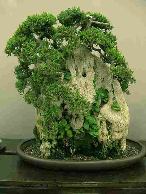 love bonsai this one is very unusual i think it is plants growing on some kind of. Black Bedroom Furniture Sets. Home Design Ideas