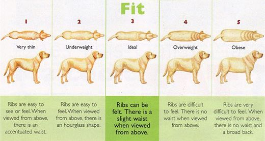 Pin By Mcsquare Doodles On Dog Health First Aid And Safety Dog Health Dog Care Dogs