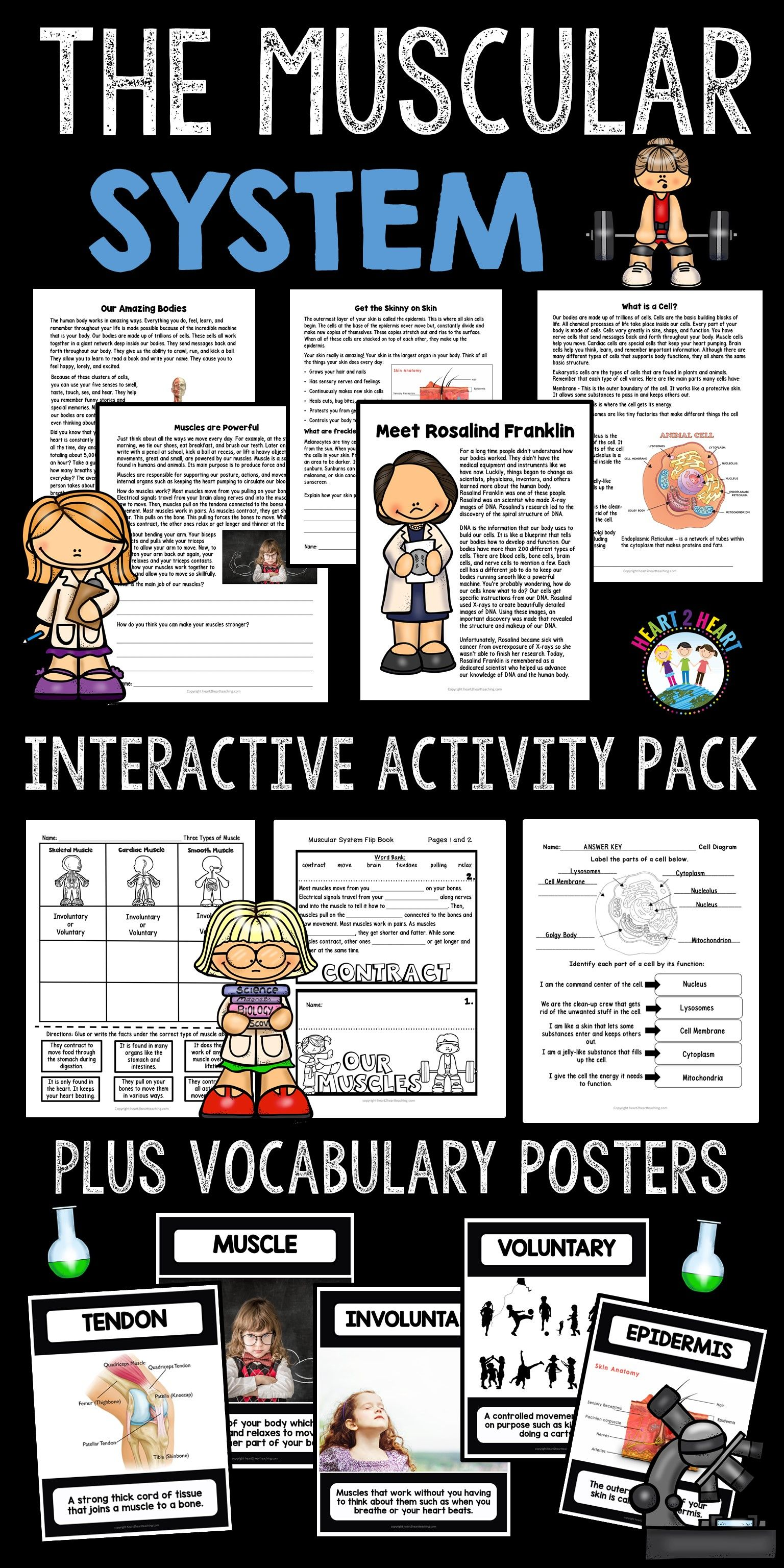 Human Body Systems Muscular System Activity Pack With