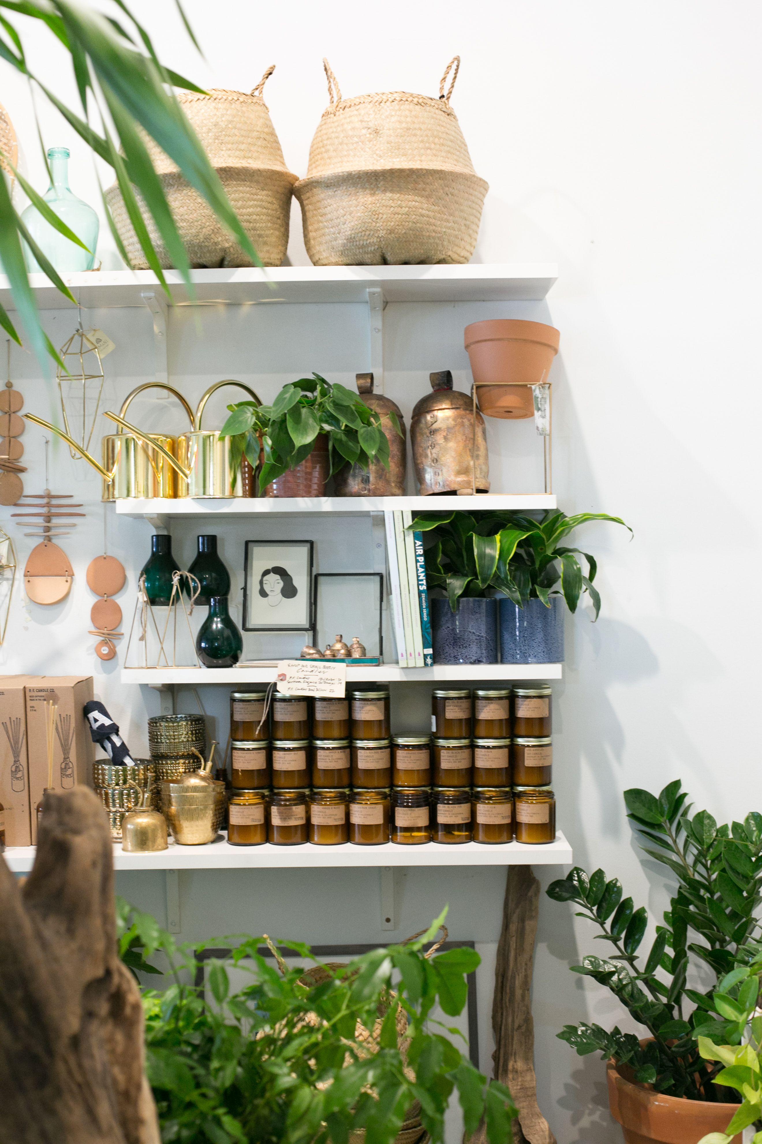 The Zen Succulent Plant Shop Modern Terrarium Planting