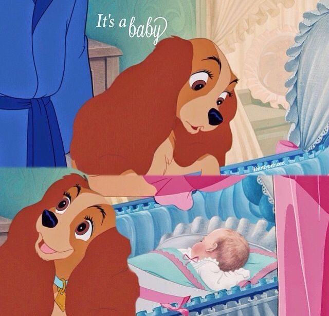 Lady And The Tramp Baby 1000 Images About Disney On Pinterest Rapunzel Beauty And The Disney Ladies Classic Disney Lady And The Tramp