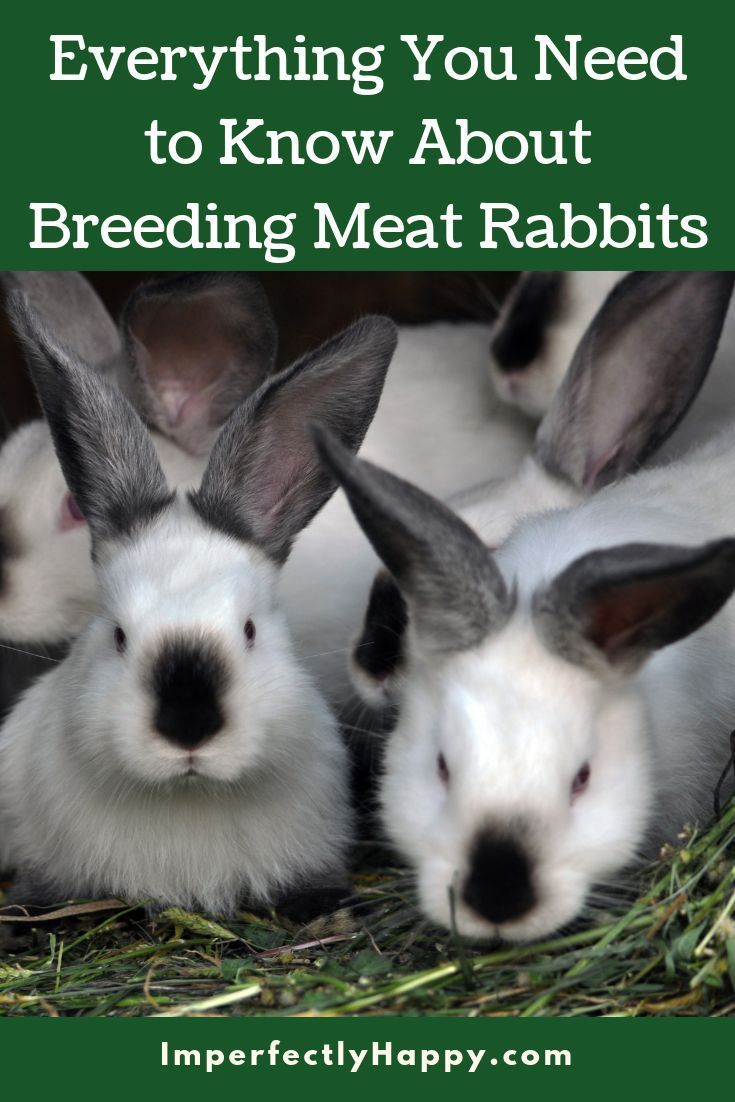 Breeding meat rabbits 101 meat rabbits raising farm