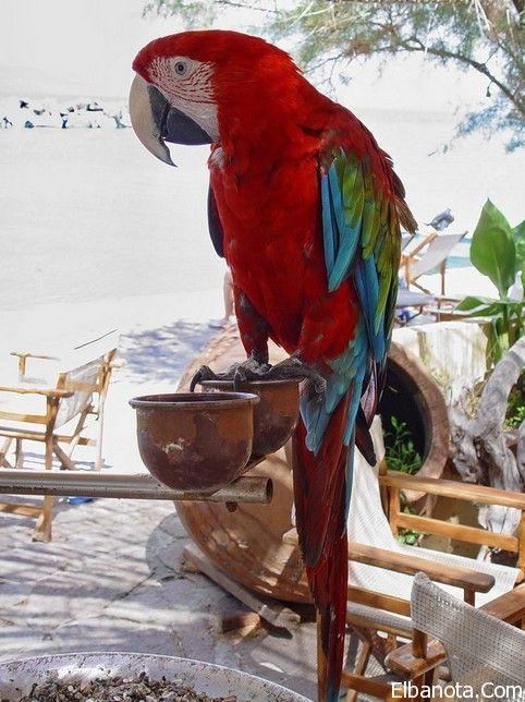 صور الببغاء اجمل 25 صورة لأجمل الببغاوات في العالم بنوته كافيه Macaw Parrot Pet Bird Animals