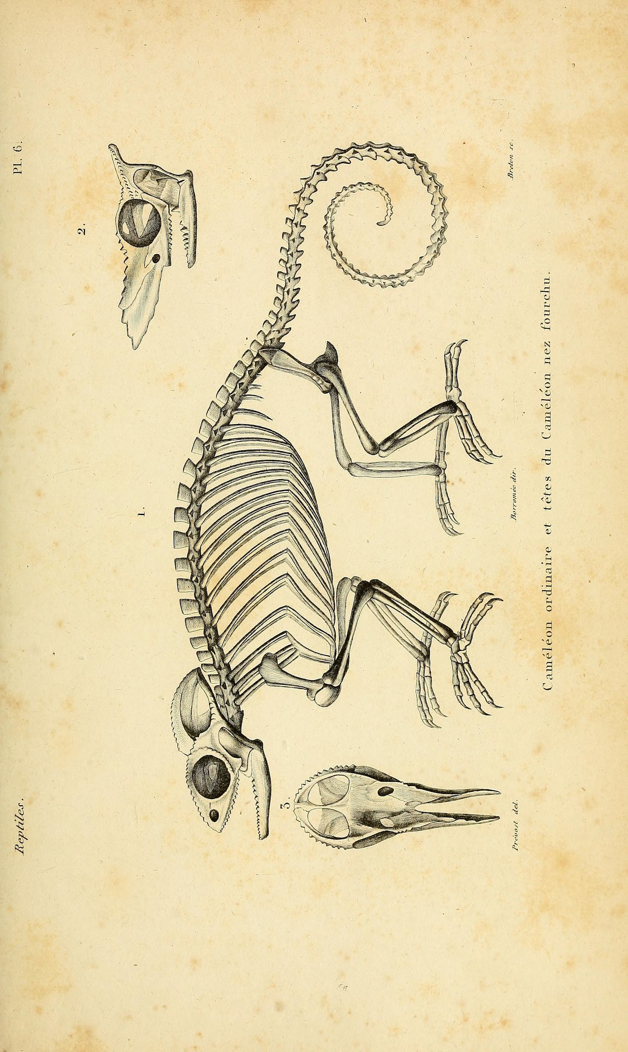 v.3 [Atlas] - Erpétologie générale, ou, Histoire naturelle complète ...
