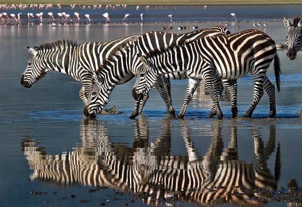 Twitter, Only in Africa pic.twitter.com/DEvDvj2jbY