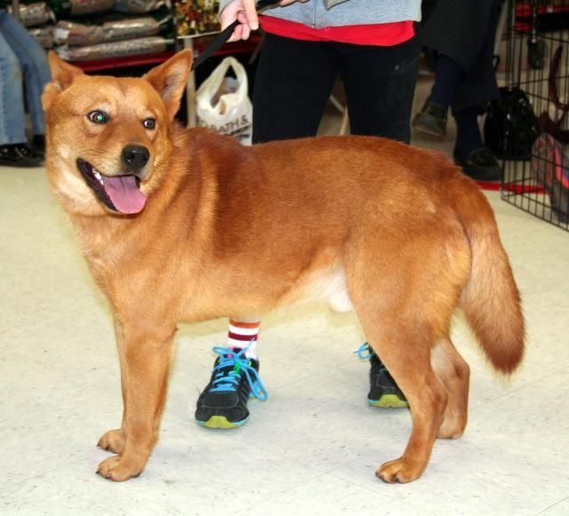 Adopt Lenny On Dogs Terrier Mix Terrier Mix Dogs