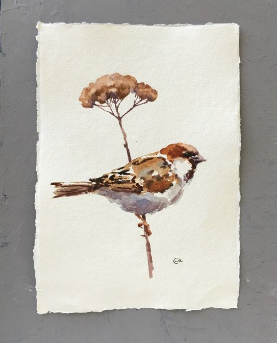 Sparrow Sans Cadre Aquarelle Originale Sur Un Haute Qualite Fait A