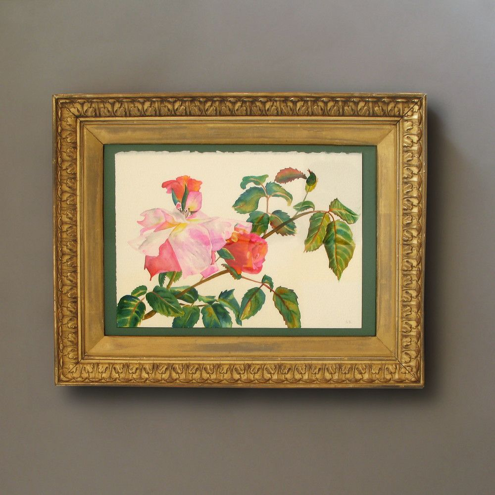 A Watercolour of Roses  C 2010 England