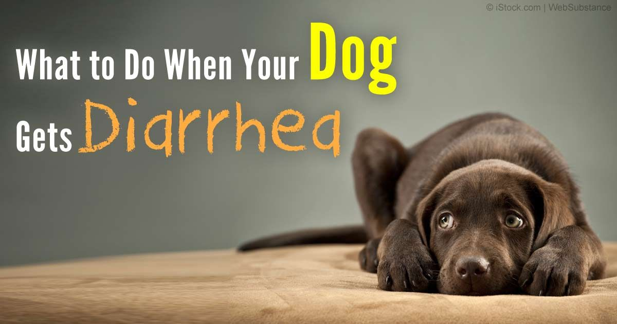 Diarrhea in Dogs Don't Let It Catch You Unprepared
