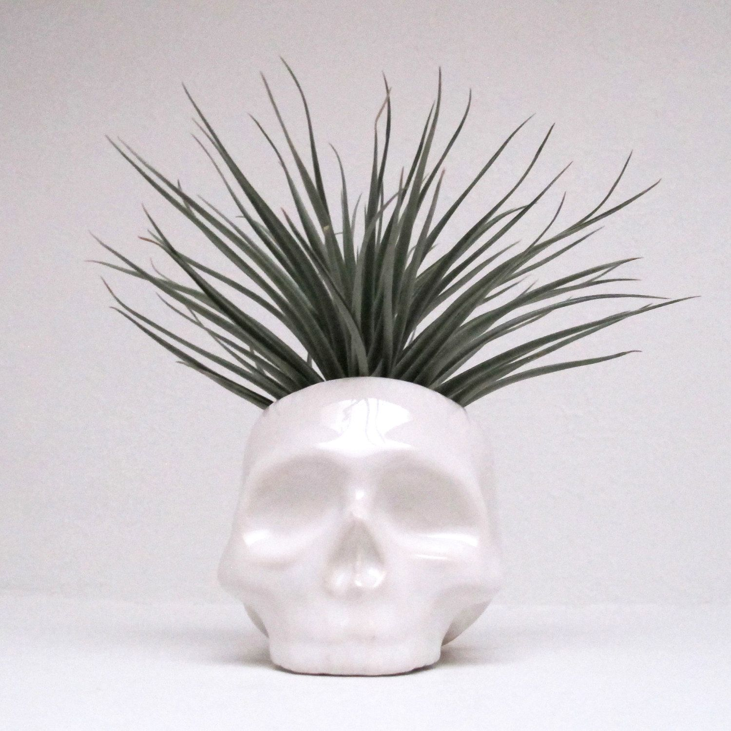 Ceramic Skull Planter perfect for cactus succulent or por mudpuppy