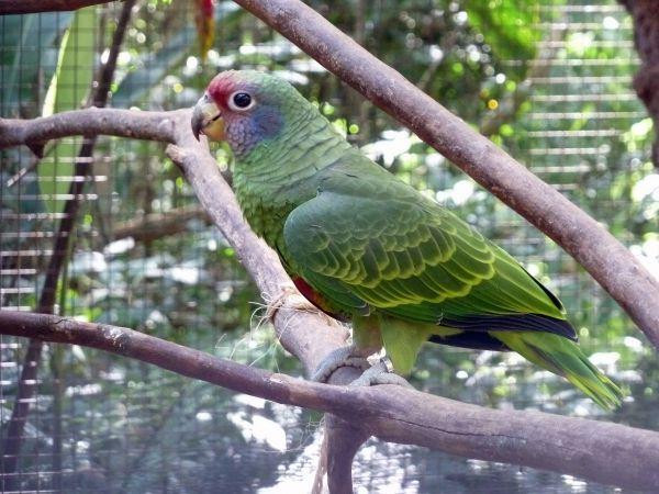 sociedadedosanimais.com.br/pesquise-e-conheça-um-pouco-sobre-os-animais: Aves