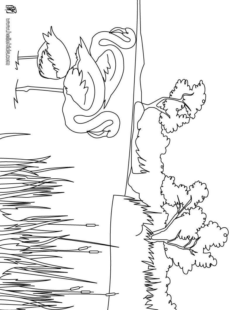 Drachenzähmen Leicht Gemacht 2 Ausmalbilder Ohnezahn : Camargue Flamingos Zum Ausmalen Coloring 2 Pinterest Ausmalen