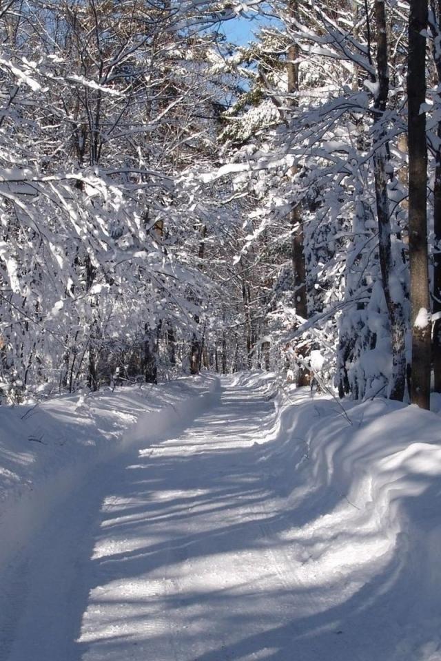 Зимний лес (с изображениями) | Зимние картинки, Зимние ...
