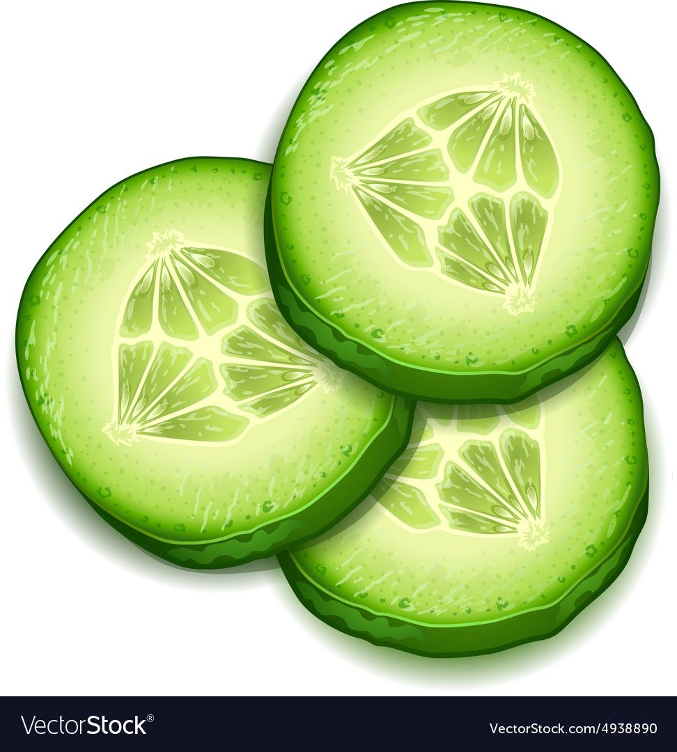 Fresh Cucumber Slice Isolated On White Background Vector Image Vegetable Drawing Cucumber Food Art For Kids
