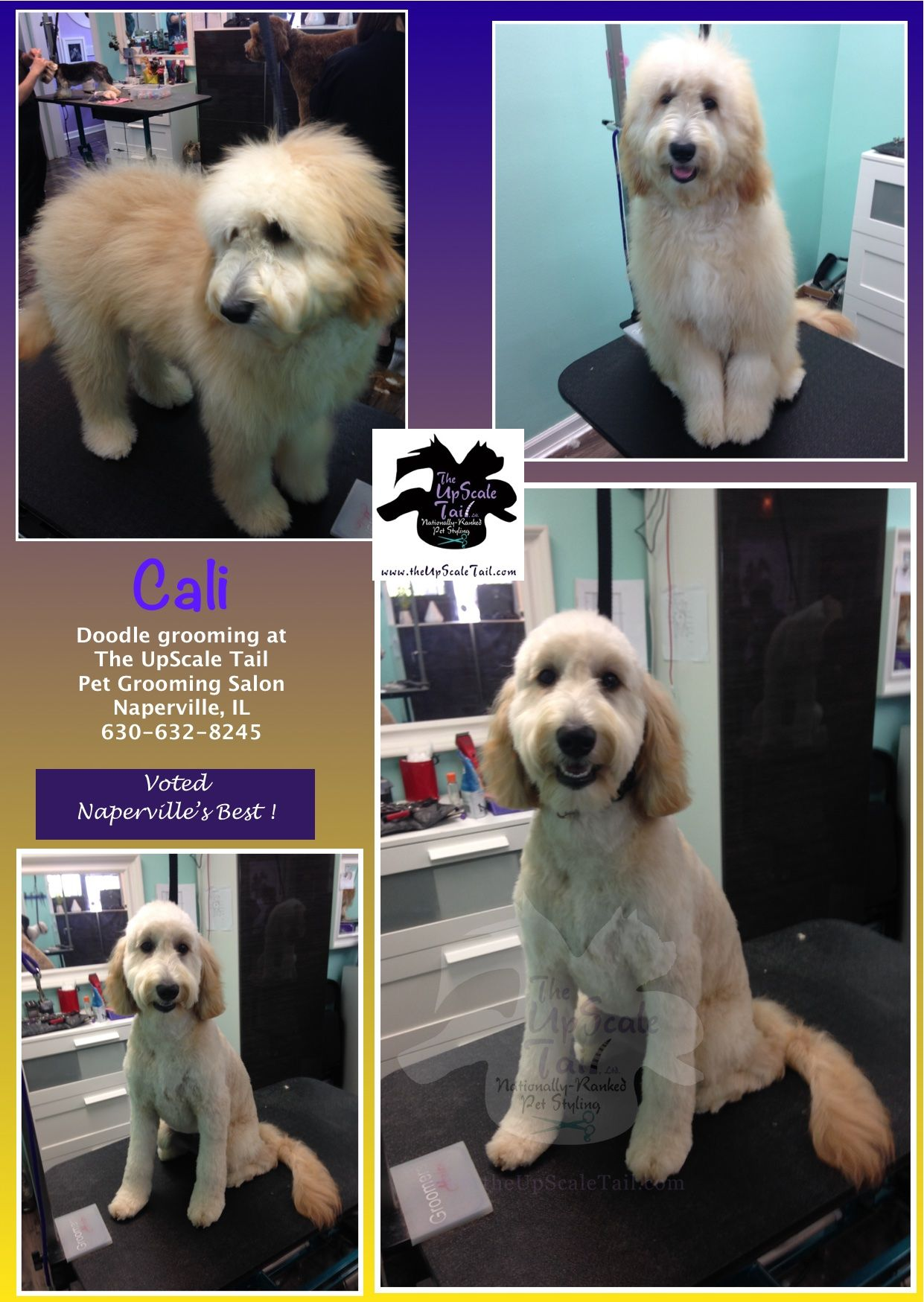Cali the Doodle, makeover & groomed at The UpScale Tail