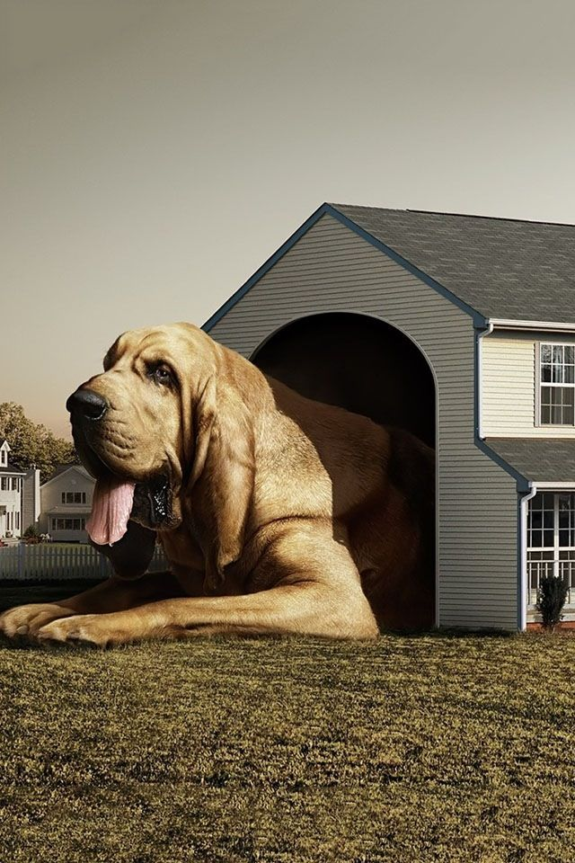 Big Dog Or Is It A Small House Big Dog House Huge Dogs Dogs