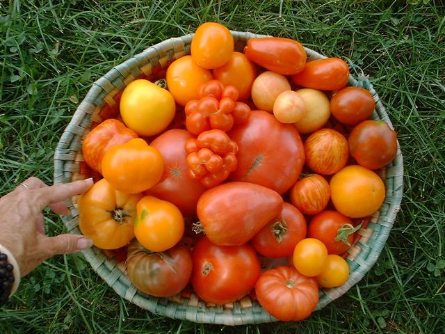 Amishland Heirloom Seed Home Heirloom Seeds Heirloom Vegetables Garden Seeds