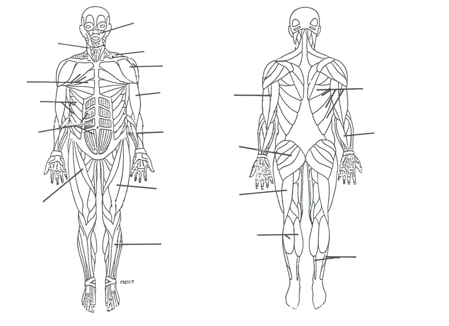 Human Body Diagram Unlabelled