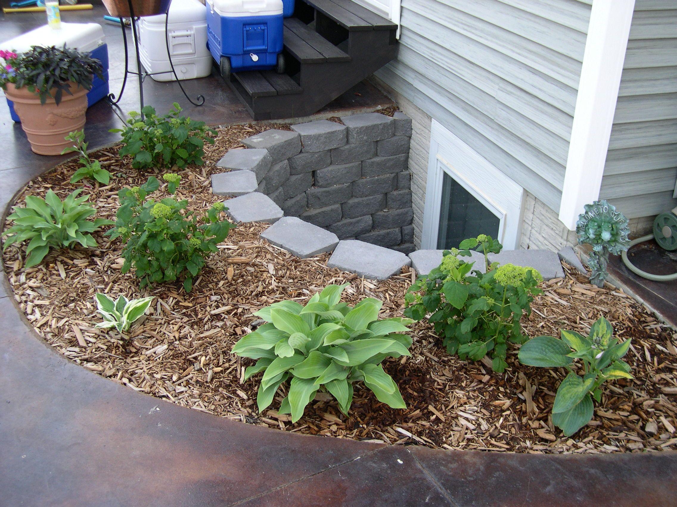 hostas great plant under