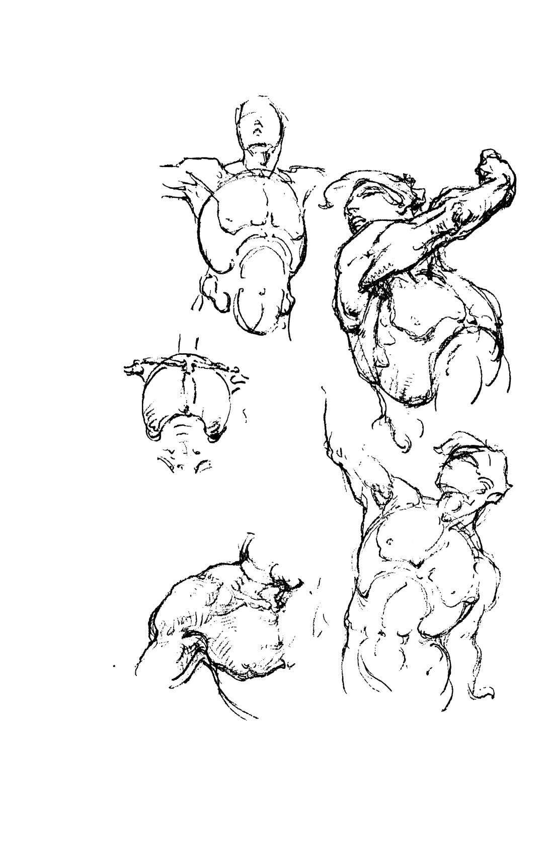 Constructive Anatomy in 2020 | Anatomy, Drawing lessons ...