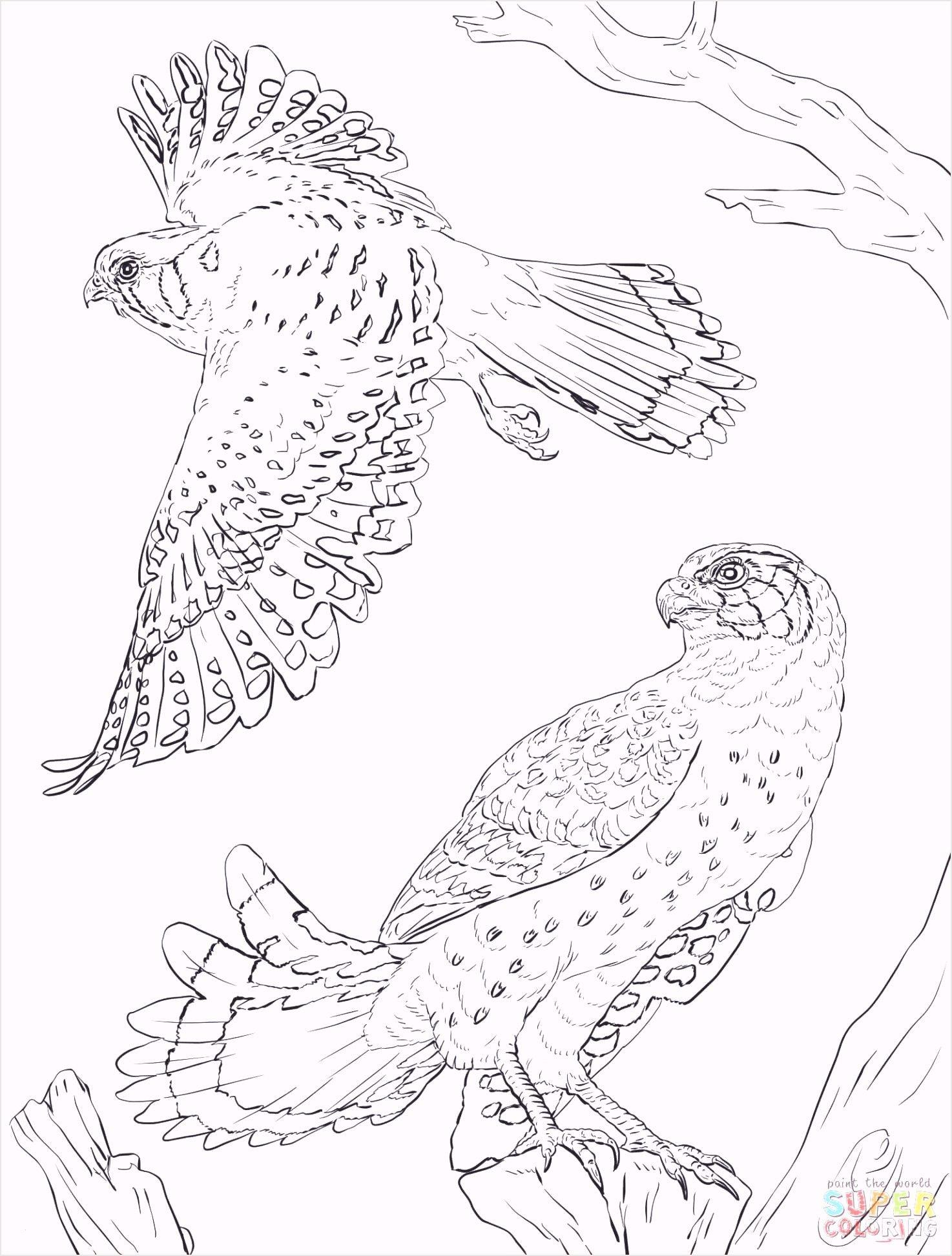 Frisch Malvorlagen Tiere Umrisse Animal Coloring Pages Spring Coloring Pages Coloring Pages