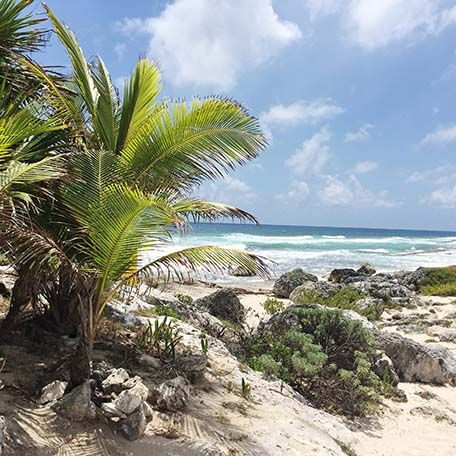 Looking for the best things to do in Cozumel? Well, here are 5 top picks.