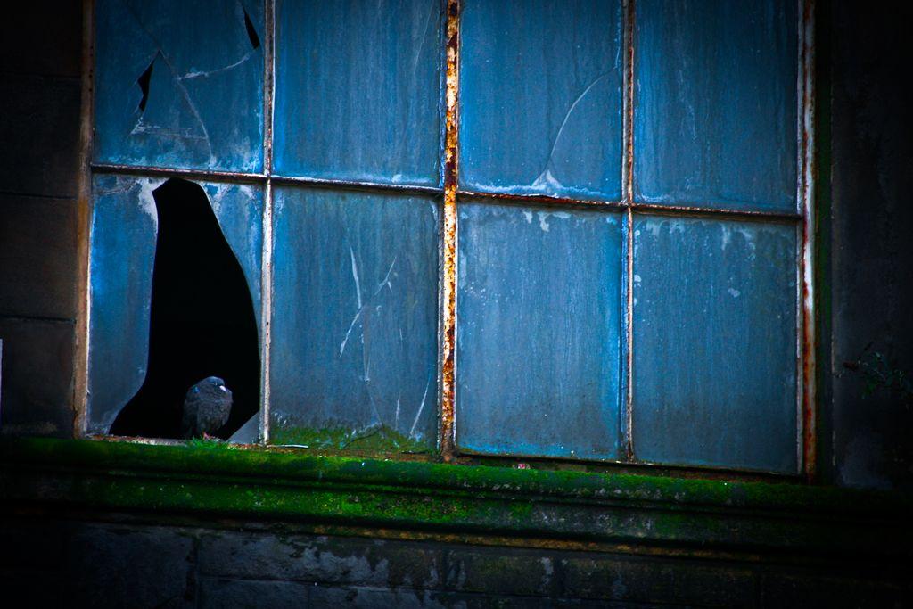 Little bird by window