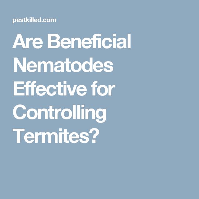 Are Beneficial Nematodes For Termites Control Effective Termites Termite Control Effective