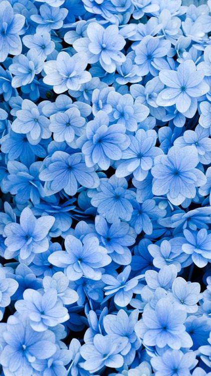 Untitled Background Cute Wallpaper Blue Lockscreen Flower Tagforlikes