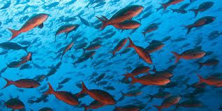 Image result for fish fish pinterest fish malpelo is a small island in the east pacific ocean located about 500 km west of the colombian mainland the unesco declared malpelo as a world heritage publicscrutiny Images