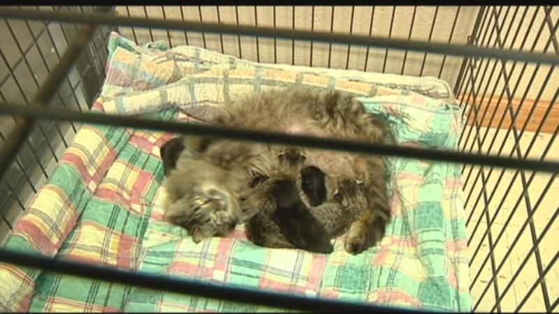 Shelter officials say proposed spay and neuter clinic