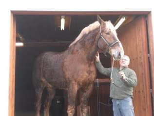 Big Jake from Wisconsin.  World's Tallest Horse