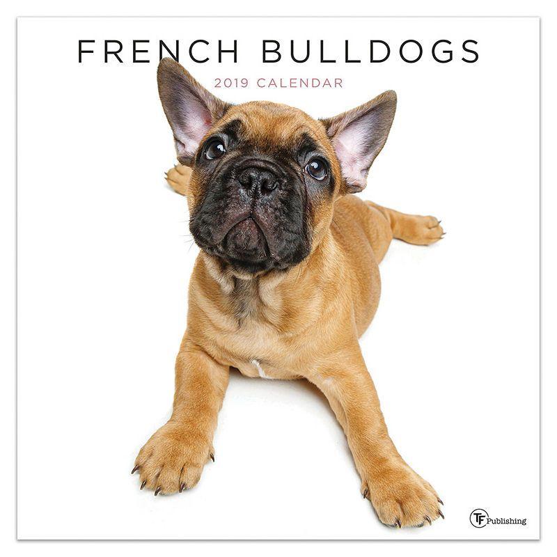 Tf Publishing 2019 French Bulldogs Wall Calendar French Bulldog