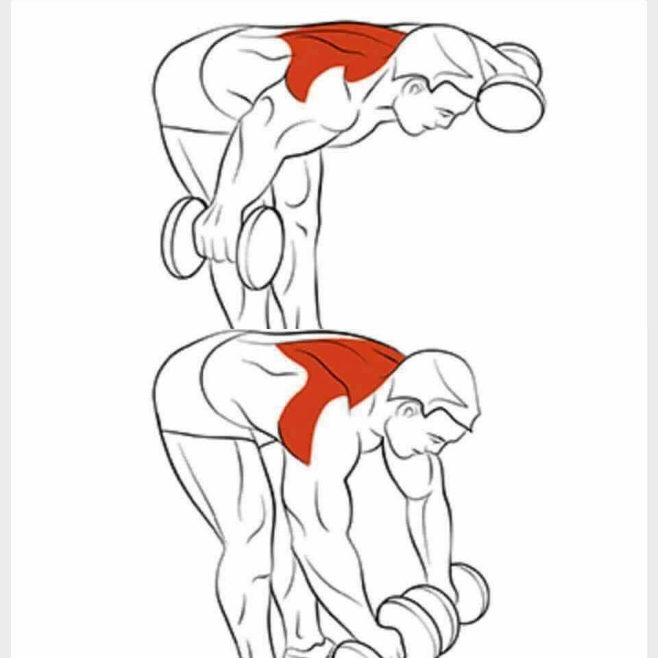 Pin von Mohamed El-Shennawy auf Bodybuilding-Shoulders Exercise ...