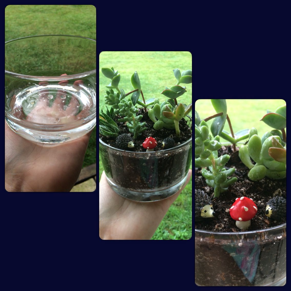 I turned a Yankee three Wick candle container into a succulent garden :-)