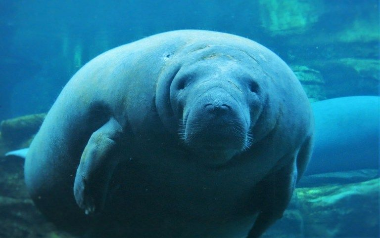 3 Places To See Manatees In Florida Places To See Florida Vacation Spots Places In Florida