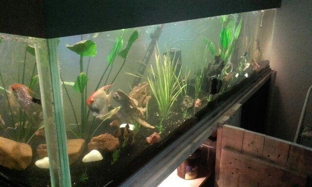 Design Aquarium Kast : Aquarium en kast af aquarium ideeën aquariums