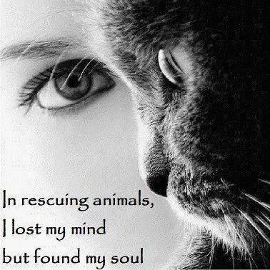 Rescuing Animals