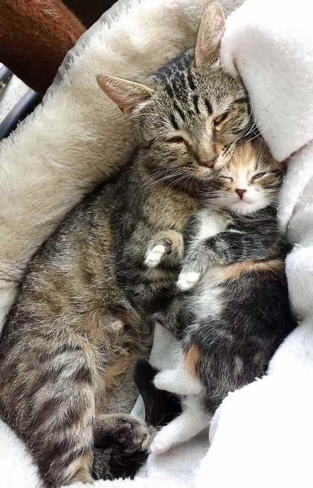 Stray Cat Mom Brings Her Single Kitten To Man Who Saved Her Life