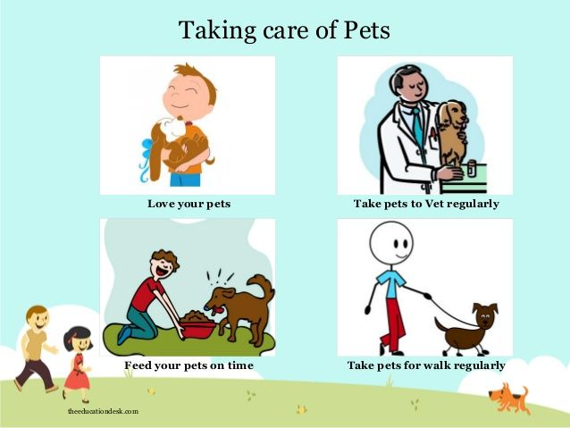 how to take care of pets at home