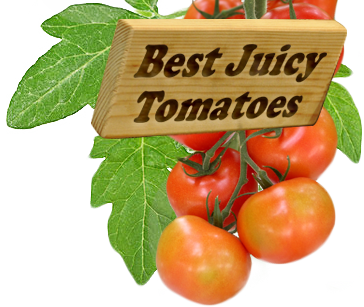Crop Rotation What To Plant After Tomatoes Growing Cherry Tomatoes Growing Tomatoes In Containers Growing Tomatoes
