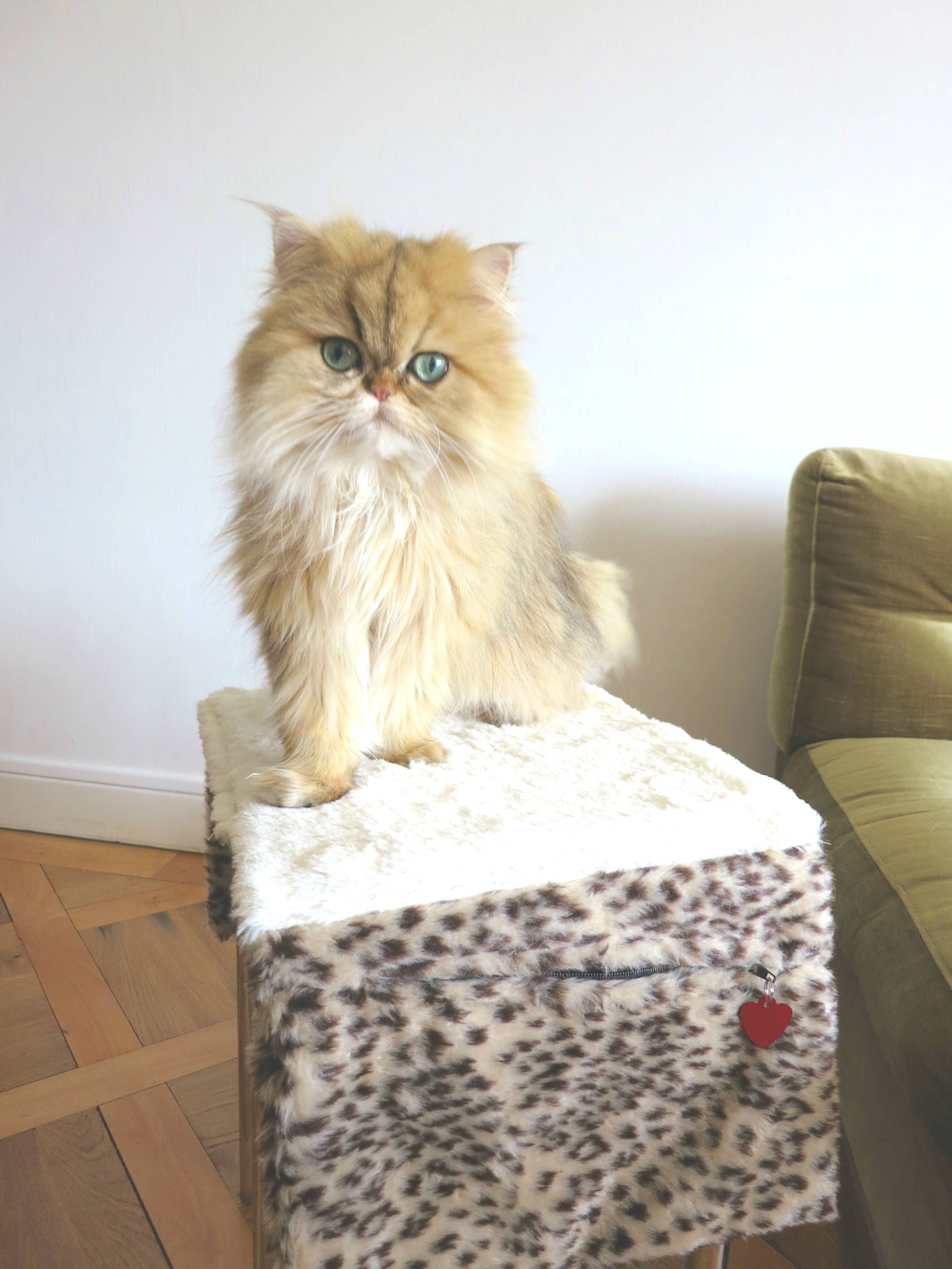 Review Love Your Laptime Cat Grooming Mat Cat Grooming Cats That Dont Shed Cat Hug
