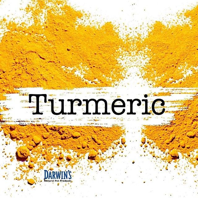 Watch Doctor Karen Becker discuss the benefits of ‪#‎Turmeric for ‪#‎pets.- A Powerful Anti-Inflammatory Agent  http://bit.ly/1rrL0ao