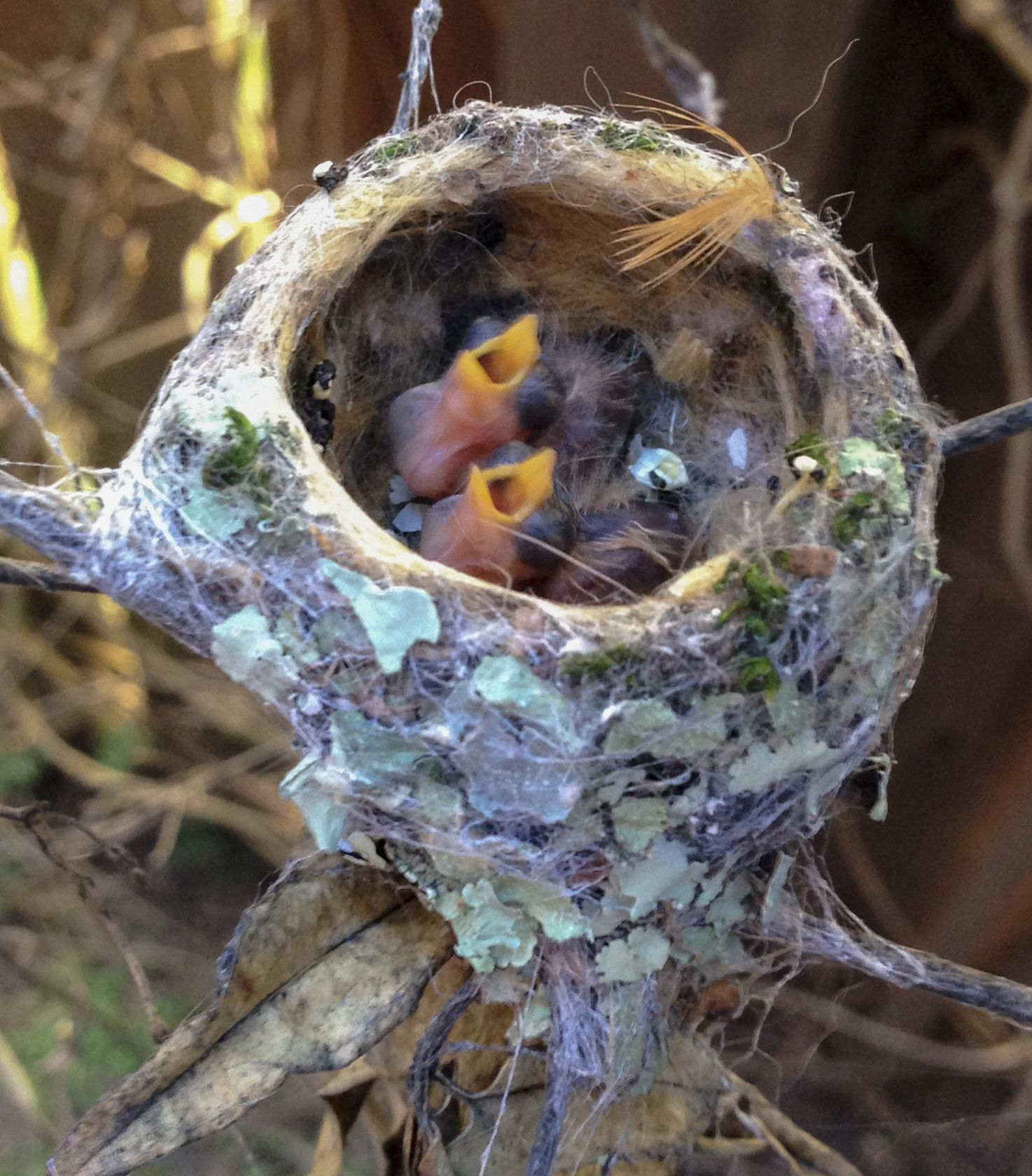 Baby Hummingbirds Leave The Nest. These Are the Cutest ...
