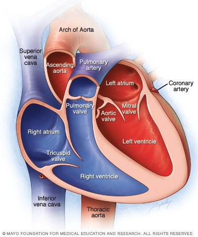 Chambers And Valves Of The Heart Cardiac Nursing Nurse Medical