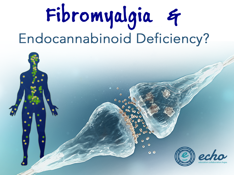 Can You Get Disability For Fibromyalgia In Illinois Could Endocannabinoid Deficiency Causes Fibromyalgia Chronic Fatigue Symptoms Fibromyalgia Chronic Fatigue Syndrome