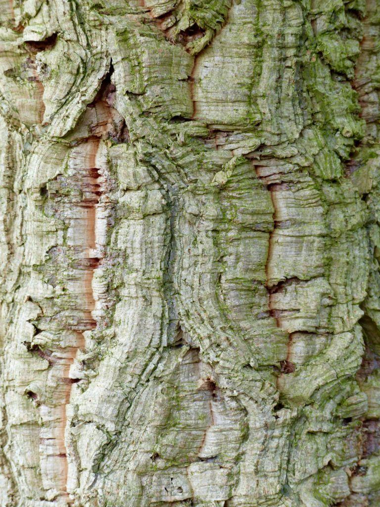 Wordpress Com Tree Textures Tree Bark Texture Tree Bark