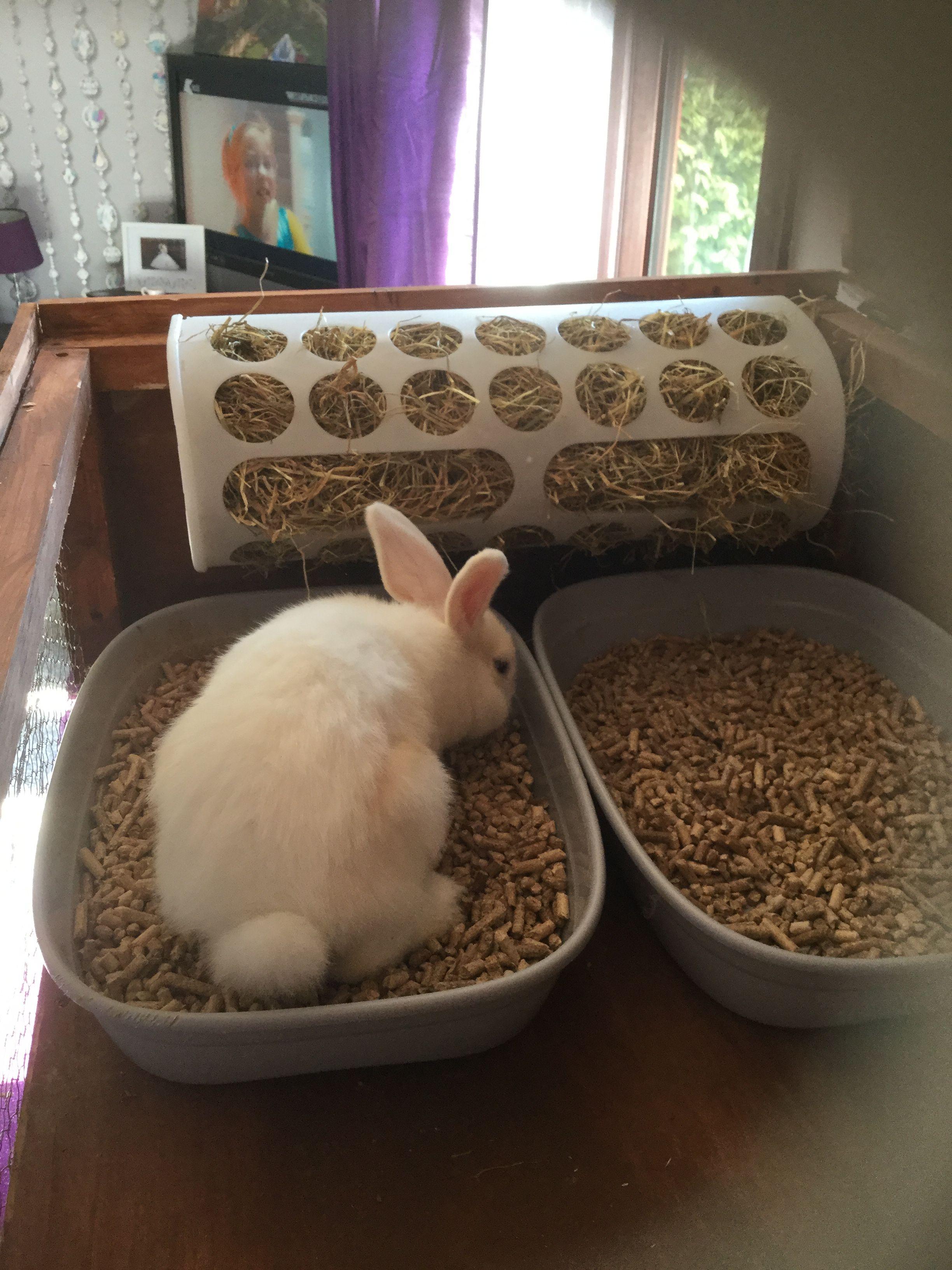 Pet Rabbit Diy