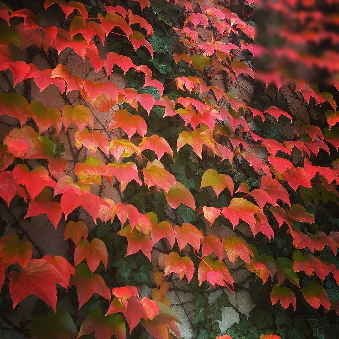 Pflanzen Im September herbst in wien bunt blätter farbe rot gelb romantisch